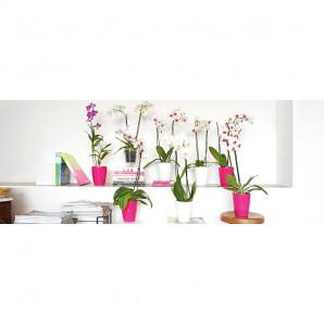 Maceta orquideas Fiji 15 cm blanco