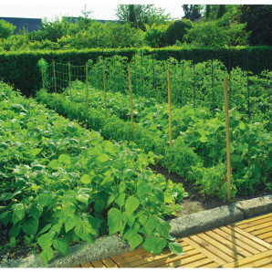 Malla judía 2 x 25 m verde