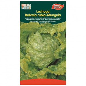 Semilla sobre lechuga Batavia Rubia Munguía