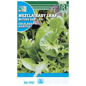 Semilla sobre lechuga mezcla Baby Leaf (ensalada asiática)