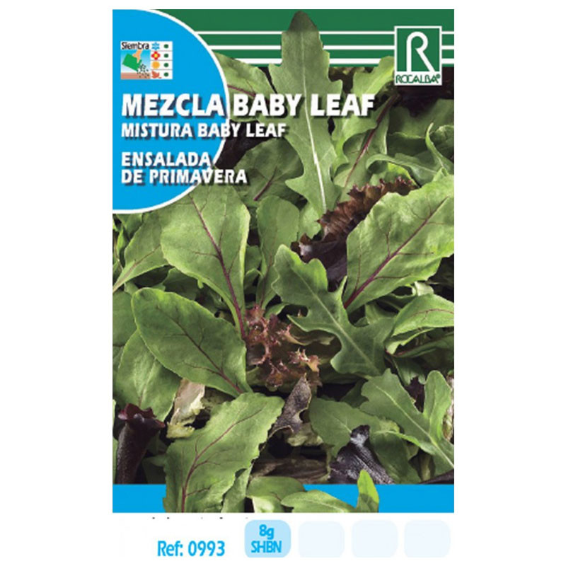 Semilla sobre lechuga mezcla Baby Leaf (ensalada de primavera)