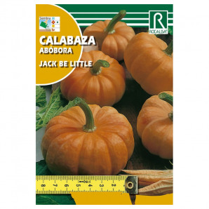 Semilla sobre calabaza Jack Be Little