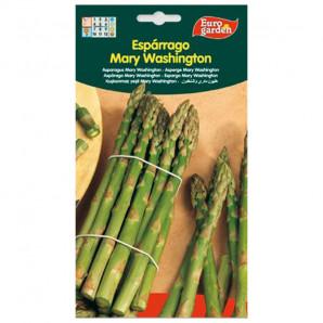 Semilla sobre espárrago Mary Washington