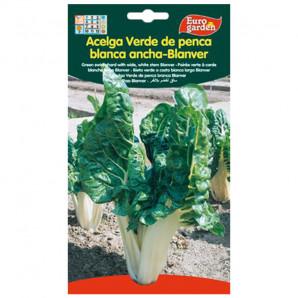 Semilla sobre acelga Verde de Penca Blanca Ancha-Blanver