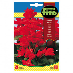 Semilla sobre Salvia Enana Roja