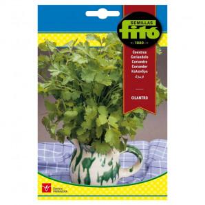 Semilla sobre cilantro