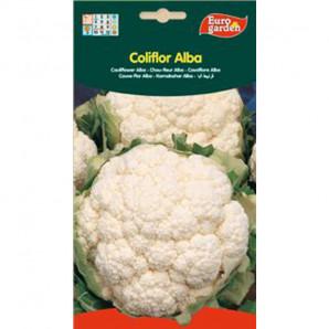 Semilla sobre coliflor Alba