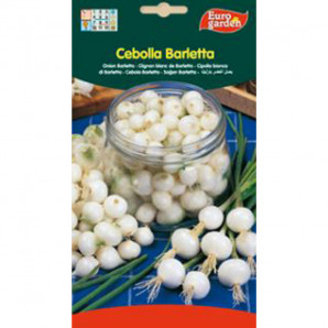Semilla sobre cebolla Barletta